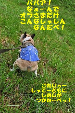 DSC_0220_201704111558151b2.jpg
