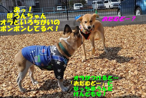 DSC_0298_20170321153806700.jpg