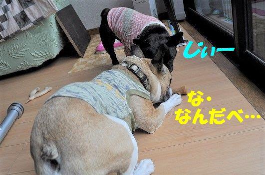 DSC_0304_20170426133346510.jpg