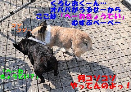 DSC_0362_20170322154818653.jpg