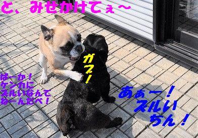 DSC_0366_20170322154820732.jpg