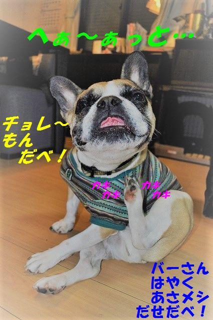 DSC_0407_20170222110800ee4.jpg
