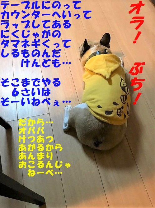 IMG_1077.jpg
