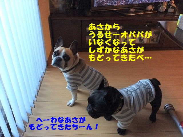 IMG_1208_20170309101631bf2.jpg