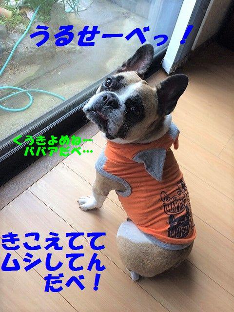IMG_1240.jpg