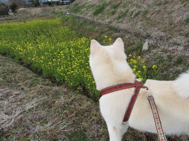 大福の散歩道