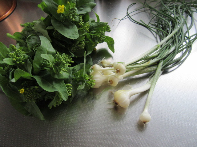 のびると菜の花