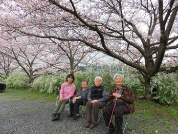 花見の写真4