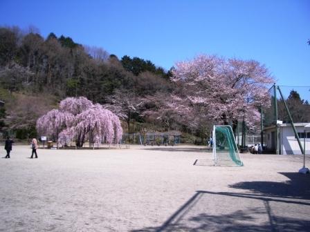 孝子桜 4月
