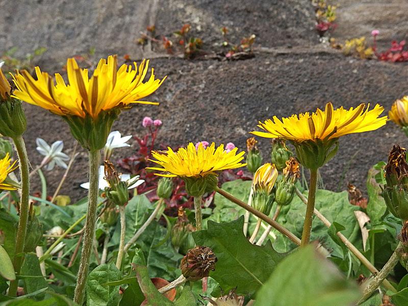 170301昼休みの花たち5
