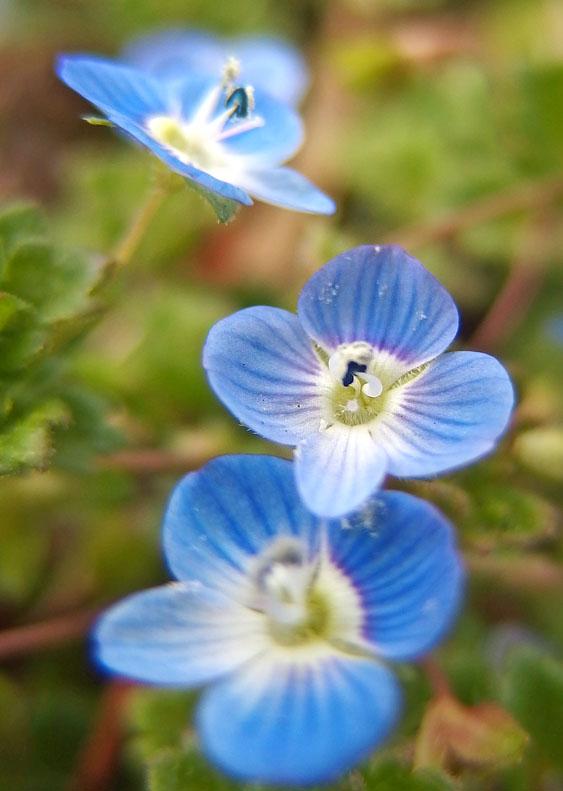 170301昼休みの花たち1