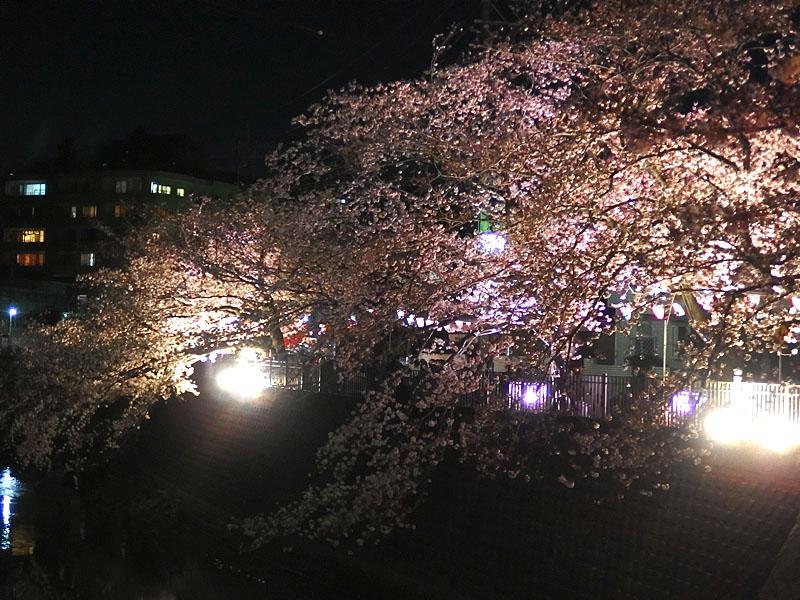 1704大岡川夜桜2