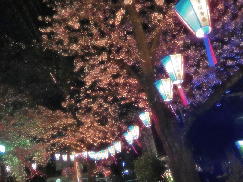 1704大岡川夜桜4