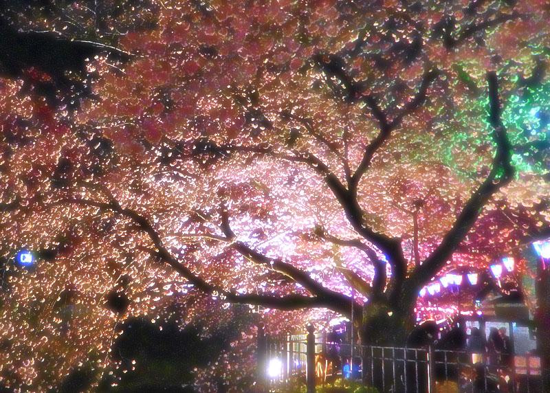 1704大岡川夜桜0