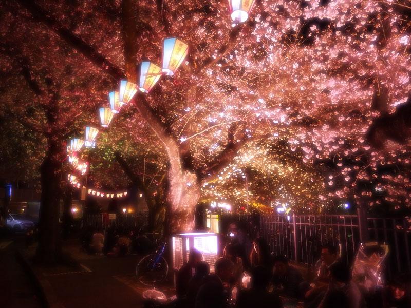 1704大岡川夜桜