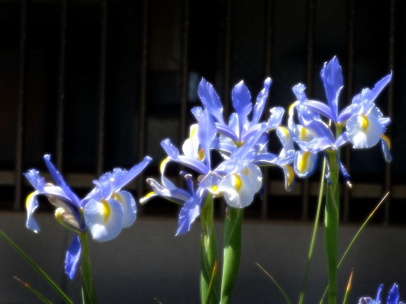 17030419,季節を先取りする花たち2