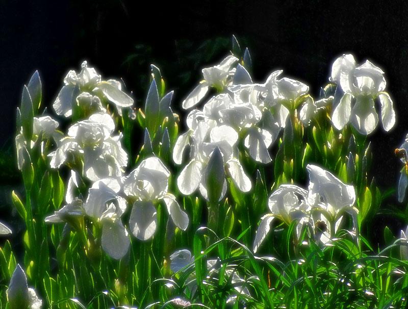 17030419,季節を先取りする花たち1