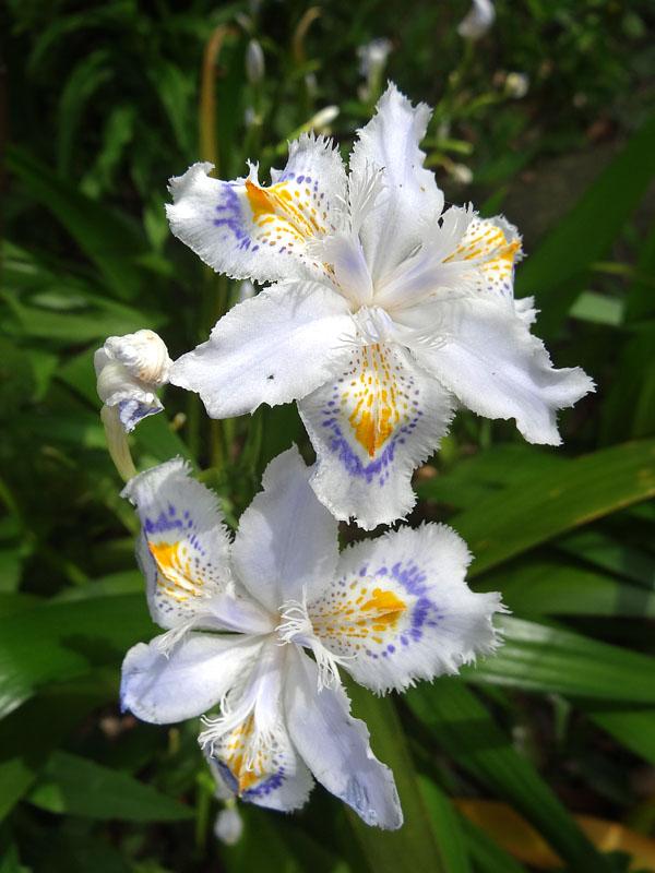 17030419,季節を先取りする花たち9