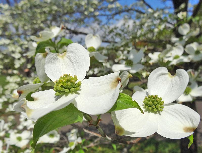 17030419,季節を先取りする花たち8