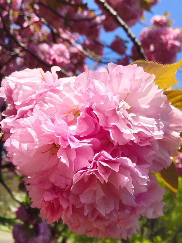 17030419,季節を先取りする花たち6