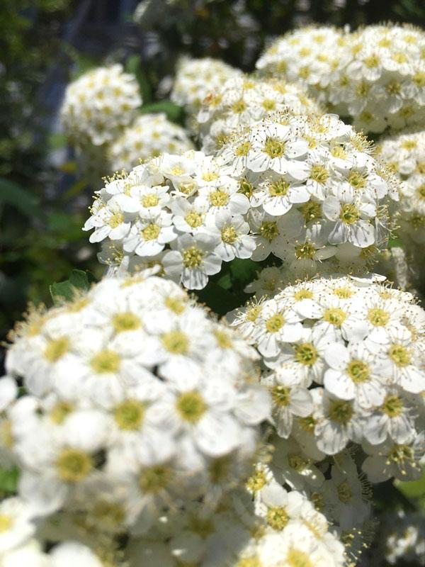 17030419,季節を先取りする花たち11