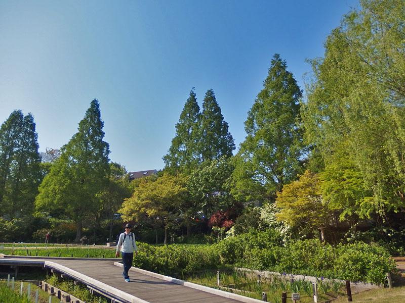 170430横須賀しょうぶ園12