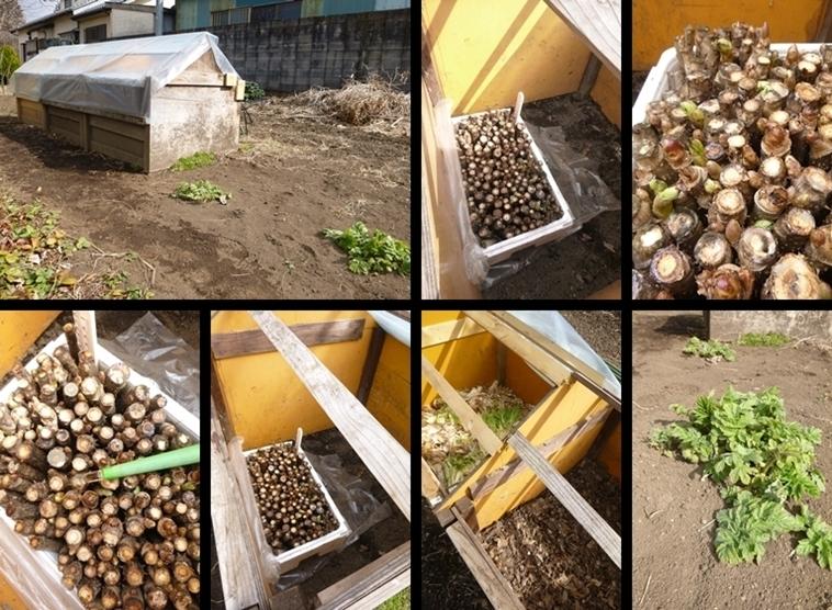 P2090713-tile-vert-vert.jpg