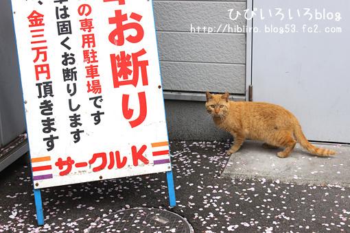コンビニ桜猫