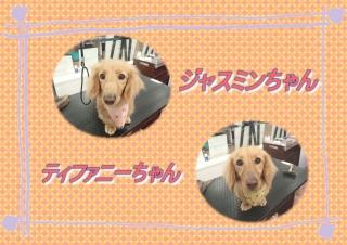 ジャスミンちゃんティファニーちゃん419