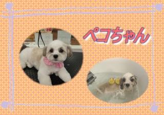 ペコちゃん419419