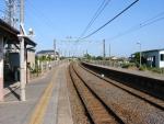 shiishiba05.jpg