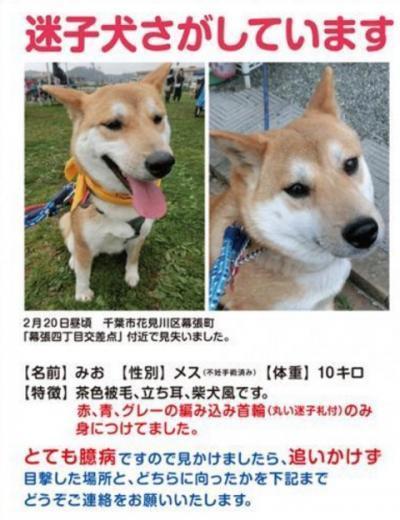 みお保護_convert_20170306123534