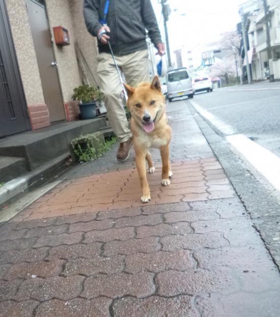 花見6(2017-4-9)_convert_20170411092851