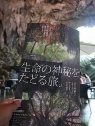 20170409沖縄 (141)