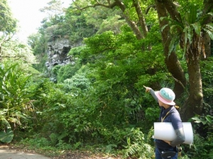 20170409沖縄 (149)