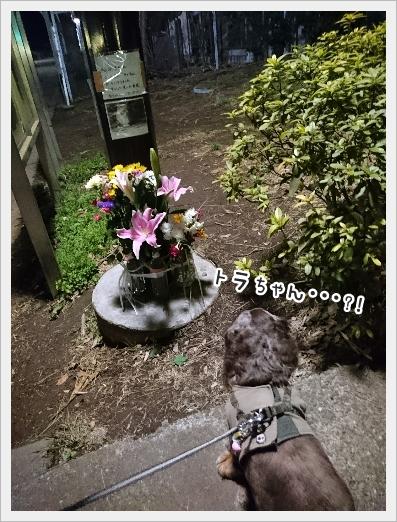 fc2_2017-03-30_02.jpg