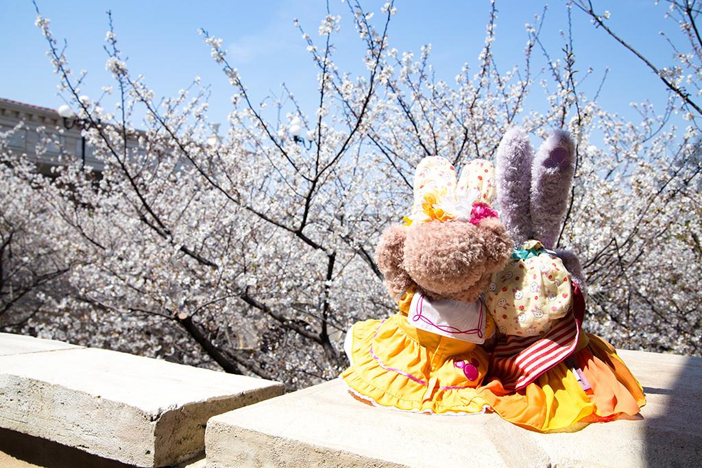 桜とジゼプリ1