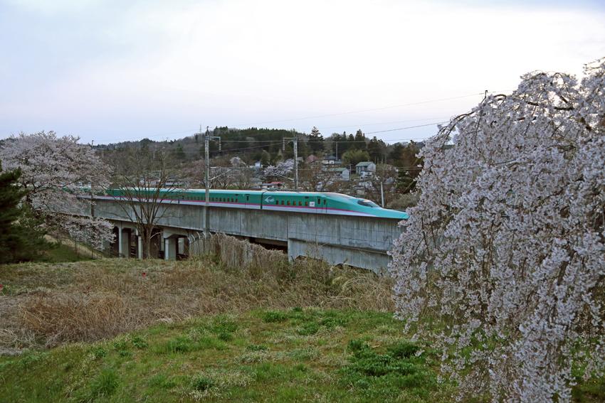 20170420桜と新幹線