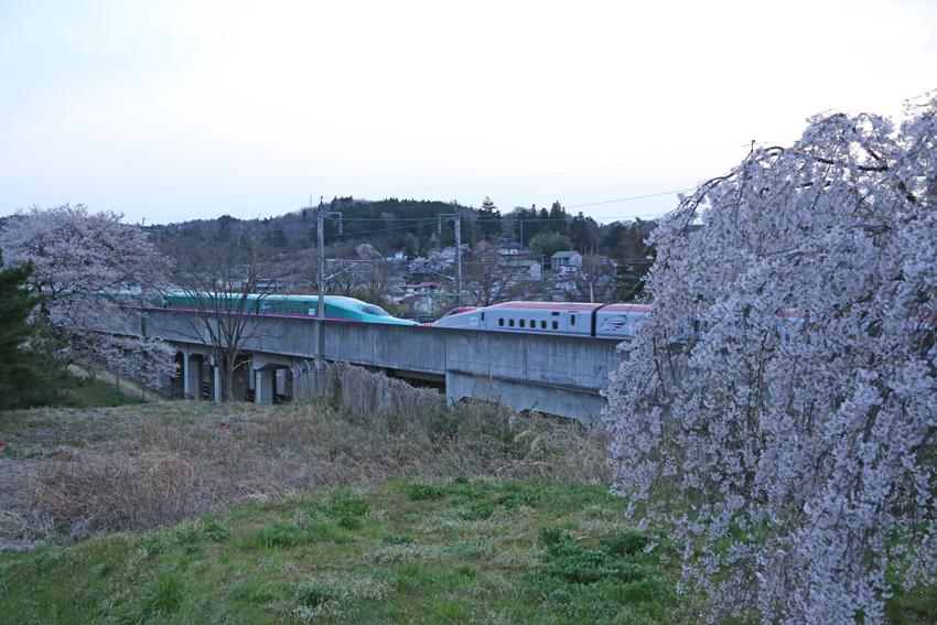 20170420桜と新幹線2