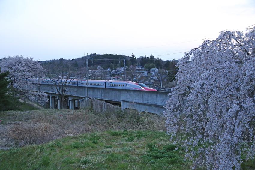20170420桜と新幹線3