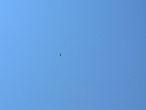 M田さんの自由ゴム機。その1!