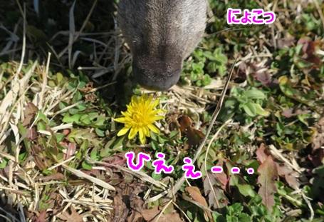 IMG_0368.jpg