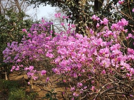 「花と緑の振興センター(1)」