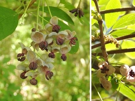 きれぎれの風彩 北本の植物170429-05