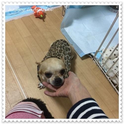 mini16IMG_8871-20170308.jpg