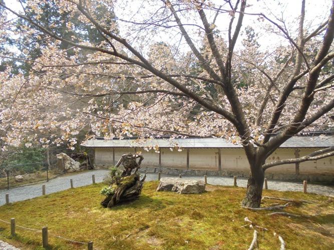 mikuruma3.jpg