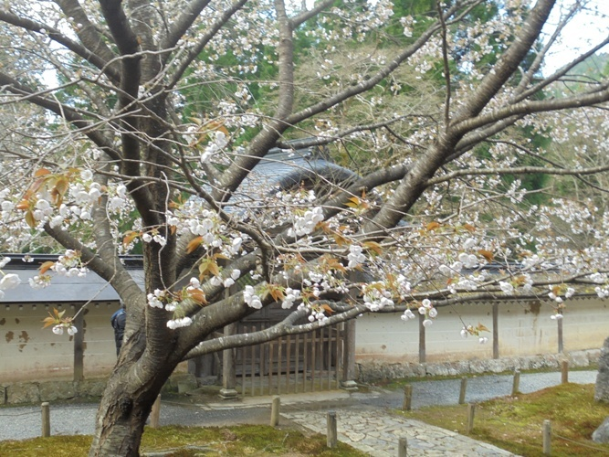 mikuruma5.jpg