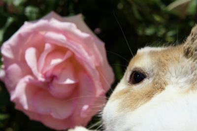 薔薇るな6