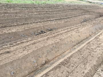 じゃが芋植え馬渡り2畝2