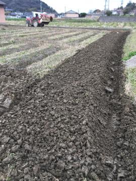 じゃが芋植え馬渡り2畝6